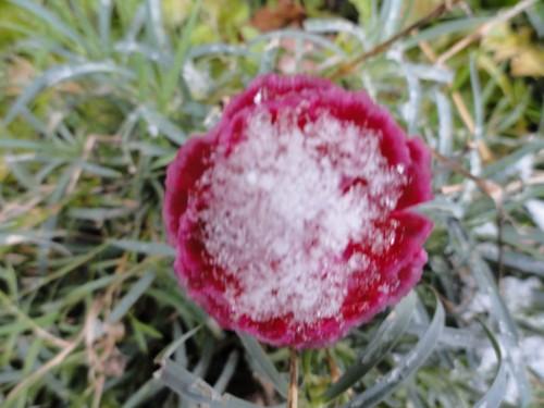 neige 1er dec 2010 004.jpg